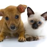 Costambar Animal Control
