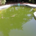Costambar Abandoned Pool